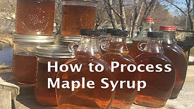 How to Process Maple Syrup