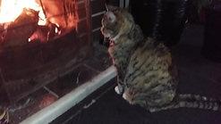 2016-08-07 07.59.28 fanny enjoying the fire