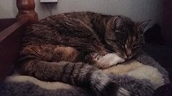 fanny resting