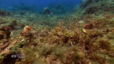 Coral Reefs Unraveling the Web