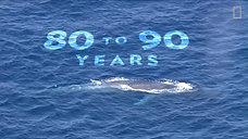 Blue Whales 101  Nat Geo Wild