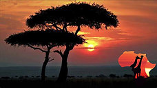 Safari Africa - Giraffes