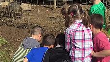 Field Trip to a Farm