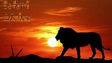 Safari Africa- Lions