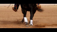 We love reining!