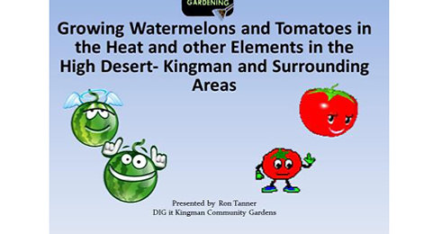 Growing Watermelons and Tomatoes