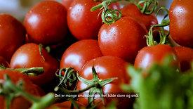 Gartner tomat