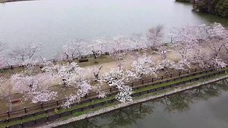 春の亀鶴公園 by F-LiNQ