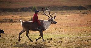 Reindeer Herders in My Heart: Healing Journeys in Mongolia by Sas Carey