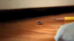 Tick Lifecycle.mp4 - YouTube (360p)