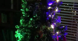 2016 pixelmapping tree