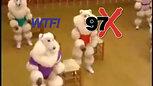 WTF - Poodle Workout