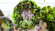 Southern Living- Succulent Wreath