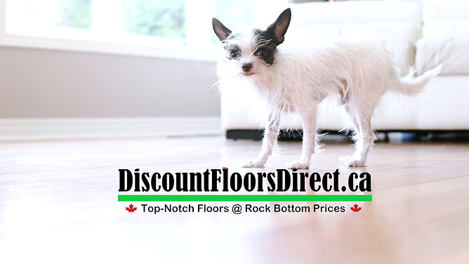 Discount Floors Direct Promo VIdeo
