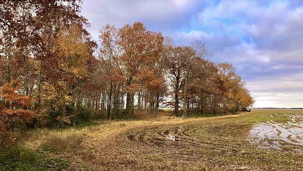 Bornhoft Farm