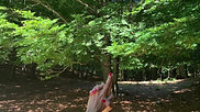 Mindful Yoga 13 Giugno 2020