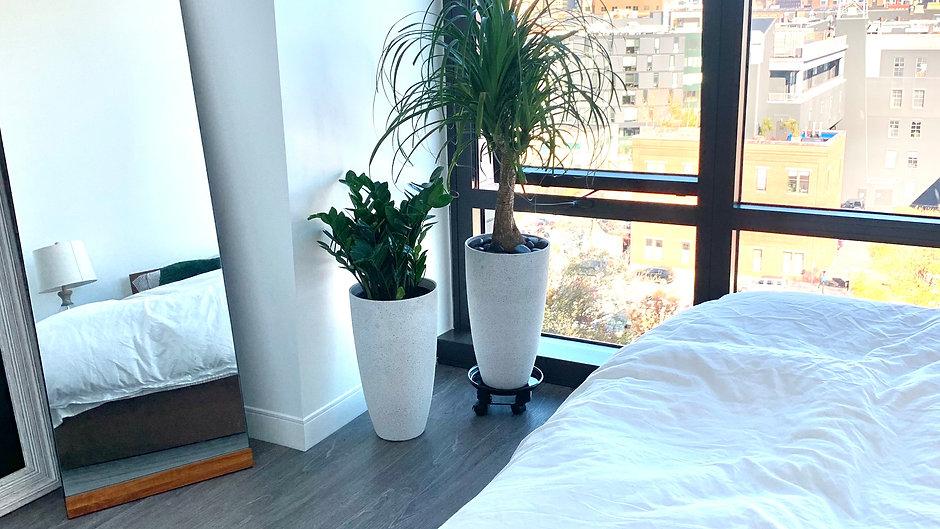 Interior Plant Design: Modern Minimalist