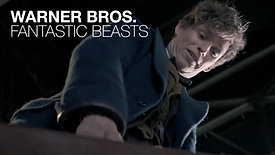 WARNER BROS - FANTASTIC BEASTS