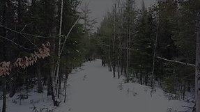 Winter Woods Walk