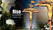 RISE - Eternal Seed