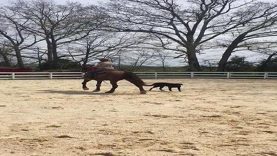 Shimmer under saddle