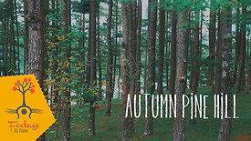 Autumn pine Đà Lạt hill 4K Footate