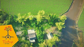 Làng Cu Hoan xóm Quý Hải Lăng Quảng Trị 01 - 4K drone footage