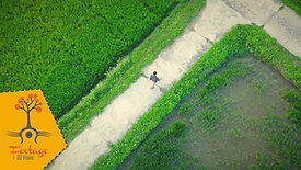 Lonely man on the green field 04  - 4K drone footage
