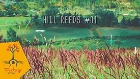 Hill reeds 4K footage