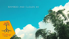 Bamboo and Clouds 2 4K footeage