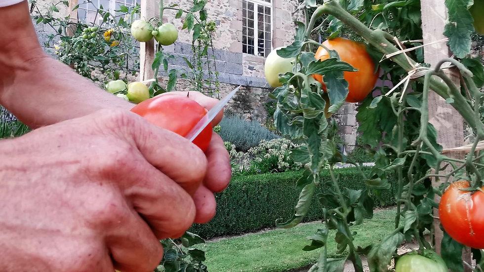 Club potager, des tomates pour tous les gouts
