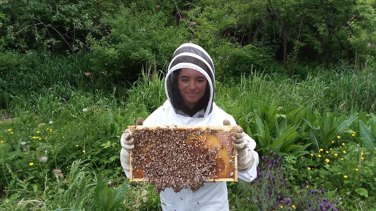 WWU learning apiary