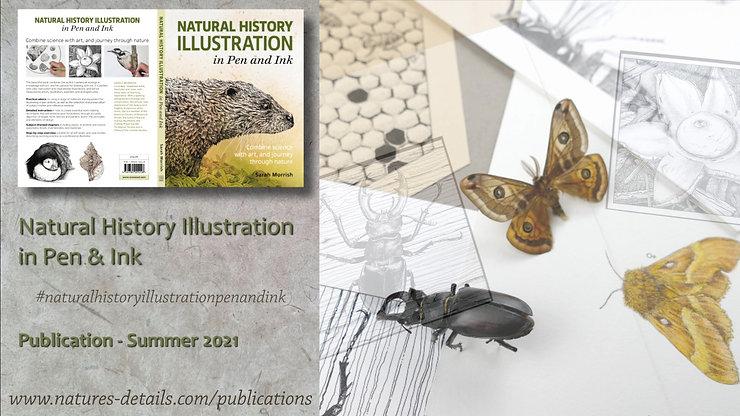 Natural History Illustration in Pen & Ink