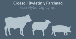 May Market Prices Preview Full Welsh