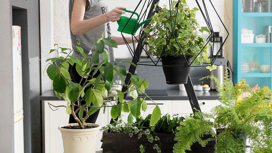 Indoor Veggie Garden