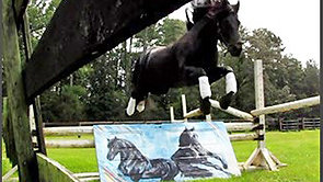 Arabo Friesian Stallion - Dark Tiesto -The Horse Behind the Door