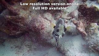 2018-12-14 AM Tori's Reef