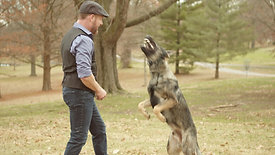 Josef Scherer Dog Trainer Promo