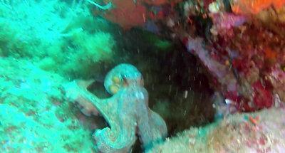 Plongée dans la Réserve Marine Naturelle de Banyuls-Cerbère