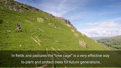 Planting Landscape Trees