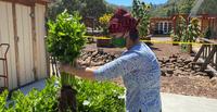 Tug McGraw Brain Food Garden Harvest 2020