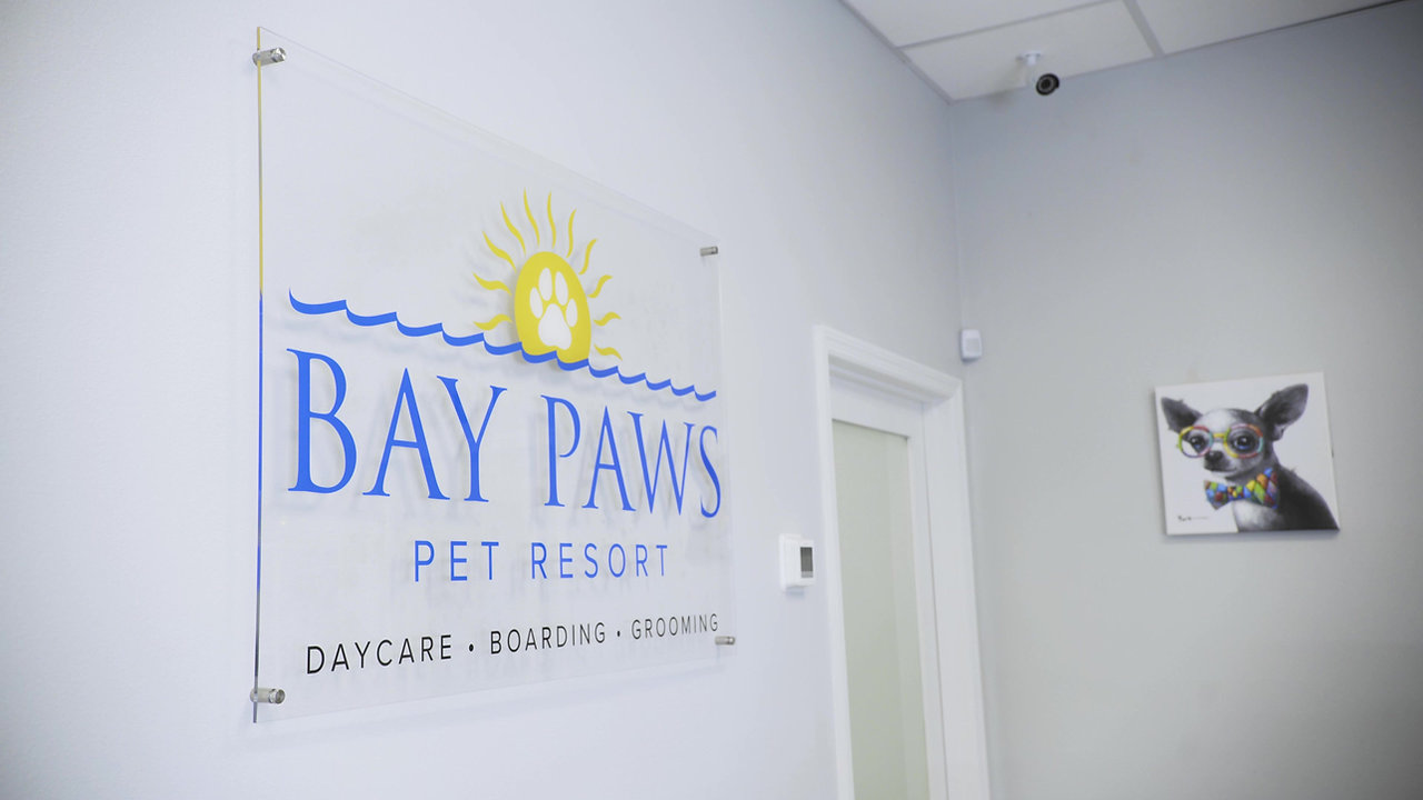 Bay Paws Video Tour