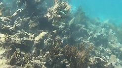 Underwater - Fishes & Turtles