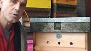 Hive Defence, Pheromones, Swarm Box and Entrance Size