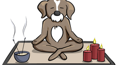 Remedies for Your Anxious Puppy