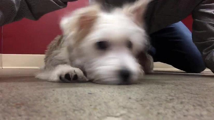 Top Dog Tube