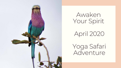 Neil Urry & Fiona Taylor | Awaken Your Spirit April 2020 Soul Sanctuary Safaris Yoga Retreat with Choose Healthy