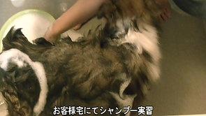 足腰が弱い犬のシャンプー