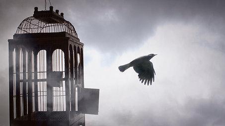 """Fly Free Bird"""