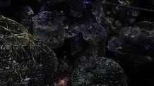 Herbier numérique